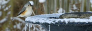best heated birdbath