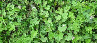 pre emergent herbicide